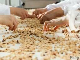 Фундук (Лесной орех, Hazelnuts) - фото 5