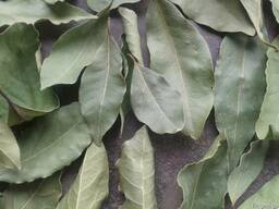 Лавровый лист (Высший сорт) механическая сушка - фото 2