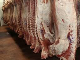 Мясо говядины