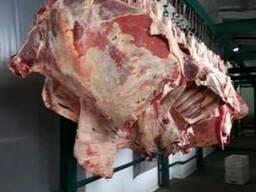 Мясо Халяль Говядина (бык) Полутуши Четверть туши