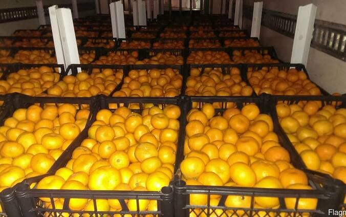 Свежие мандарины урожай 2017
