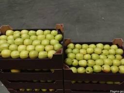 Яблоки из Польши! Apples from Poland! - photo 1