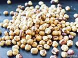 Фундук (Лесной орех, Hazelnuts) - фото 2