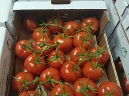 Georgian Fruts продаем томаты премиум класса на ветке - фото 3