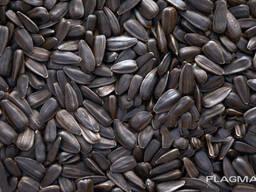 Подсолнечник / Sunflower seeds