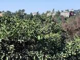 Продается дом с земельным участком в 1 гектар. - фото 7