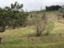 Продаётся земля 2000 кв. м. ,29$ за кв. , в Чакви 1.5 км. от моря.