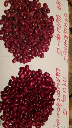 Sell red and white beans wholesale, origin Kyrgyzstan