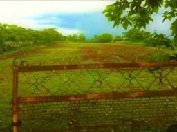 Срочно продаётся земля 9001 кв. , 400 метров от моря, в Кобулети.